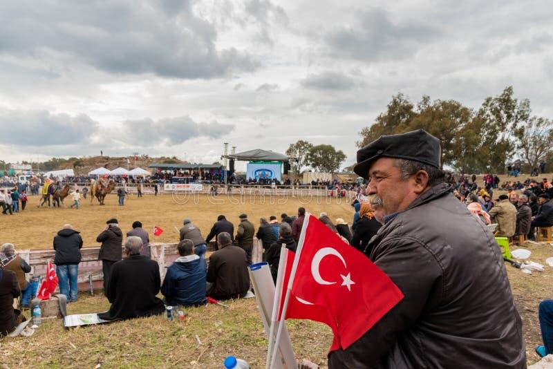 De kameel die in Selcuk Arena, Kameel worstelen die is populaire toeristische attractie in Turkije worstelen stock afbeelding
