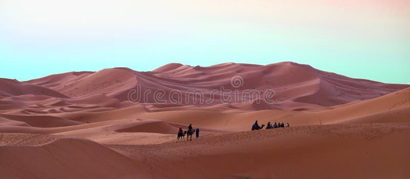 De kameelcaravan met een kameelbestuurder voert de overgang van toeristen in Sahara Desert in Marokko uit royalty-vrije stock fotografie