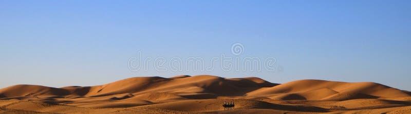 De kameelcaravan met een kameelbestuurder voert de overgang van toeristen in Sahara Desert in Marokko uit stock foto's