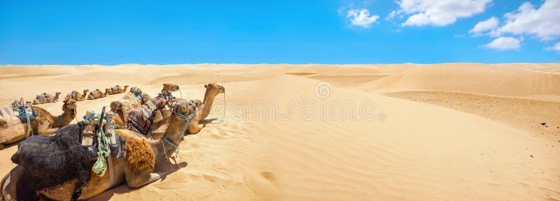 De kamelen rusten tijdens onderbrekingstijd, het wachten van toeristen Sahar stock afbeelding