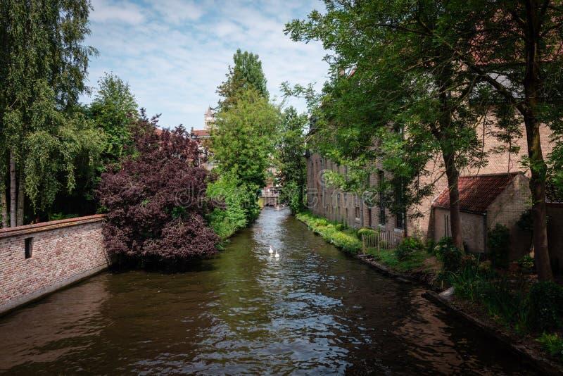 De kanalen van Brugge op een zonnige dag met witte wolken Schilderachtige landschapszwanen die in het kanaal zwemmen stock afbeelding