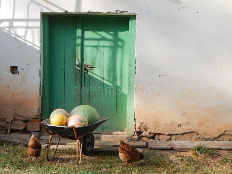 De kar met pompoenen en chiken onder het royalty-vrije stock afbeelding