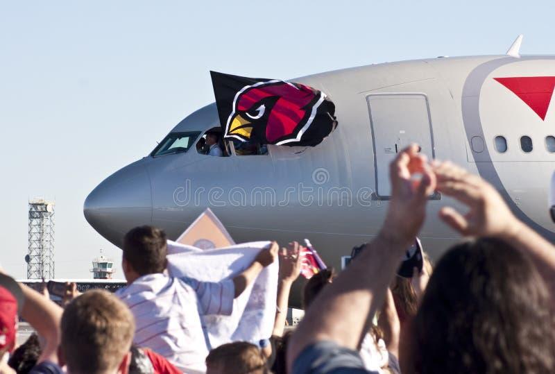 De kardinalen markeren Gevlogen van het Venster van de Loods stock foto