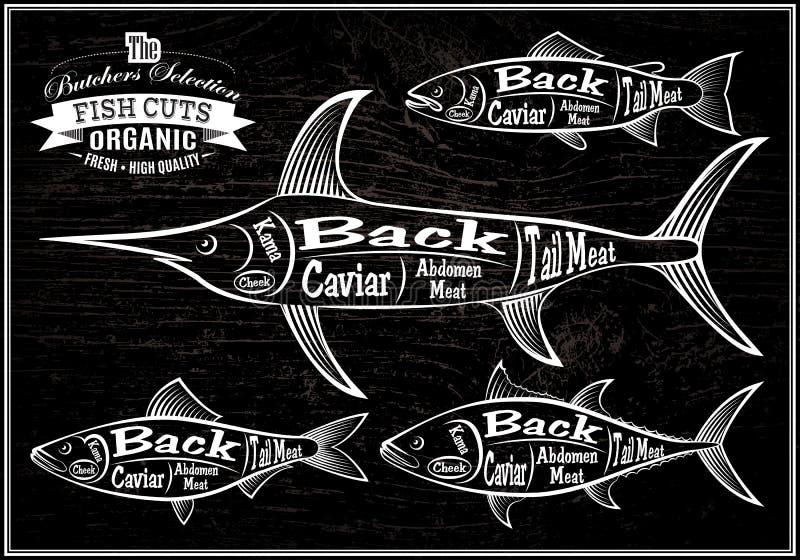 De karkassenzalm van de diagrambesnoeiing, zwaardvissen, haringen, tonijn vector illustratie