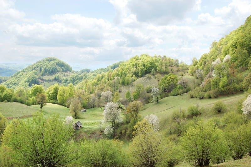 De Karpatische Bergen in Mei stock afbeelding