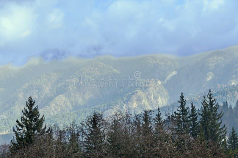 De Karpatische Bergen met pijnbomen bos, gekleurde bomen, bewolkte trillende hemel, de herfst-winter tijd Predeal, Roemenië stock afbeeldingen