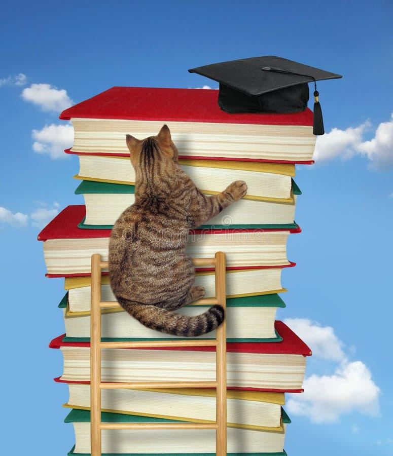 De kat beklimt de ladder van kennis 3 stock afbeeldingen