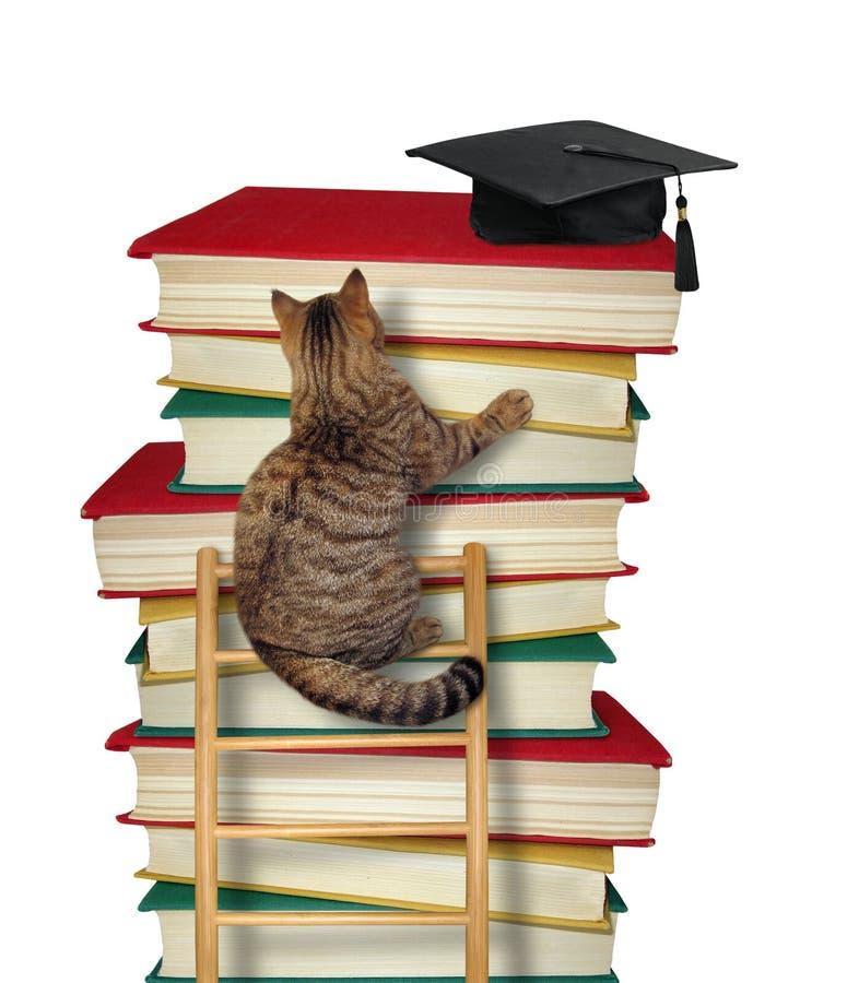 De kat beklimt de ladder van kennis stock fotografie