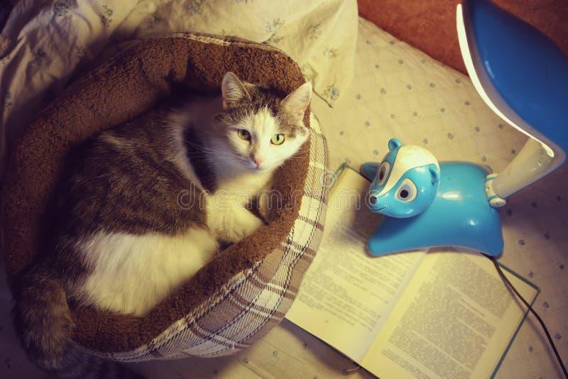 De kat catbed binnen met lamp en boek dichte omhooggaande foto stock afbeeldingen