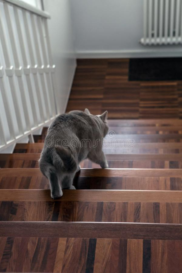 De kat daalt voorzichtig onderaan de treden stock afbeelding