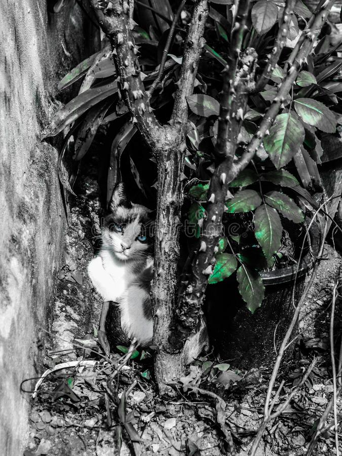 de kat die aan snotaap rusten kijkt later als he' s in de installaties stock foto's
