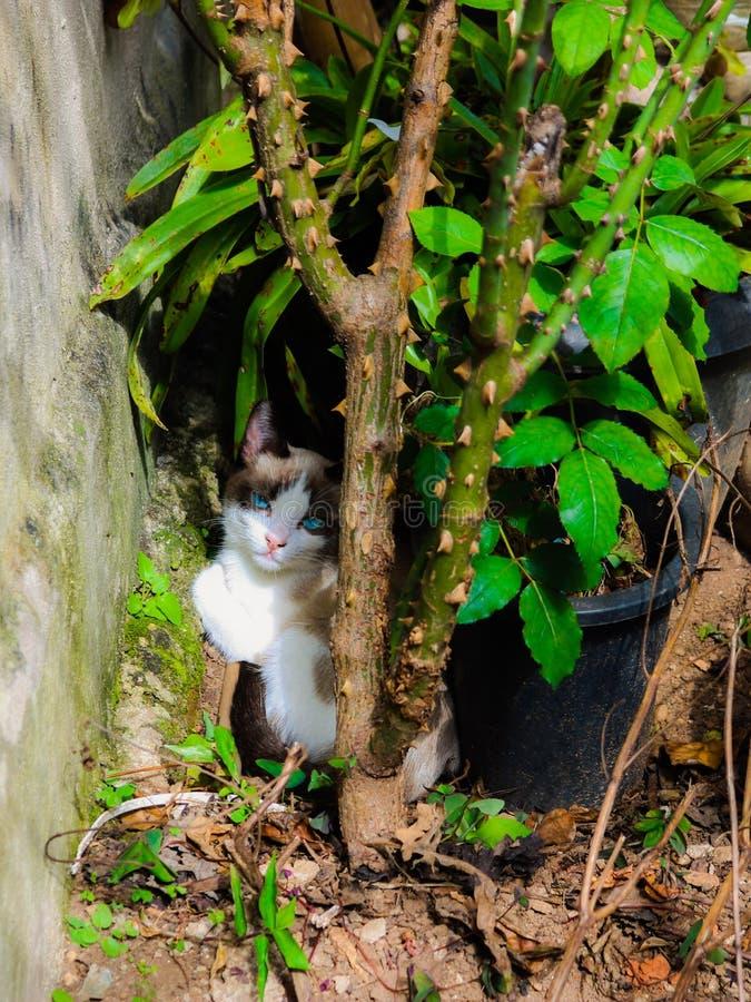 de kat die aan snotaap rusten kijkt later als he& x27; s in de installaties royalty-vrije stock afbeeldingen
