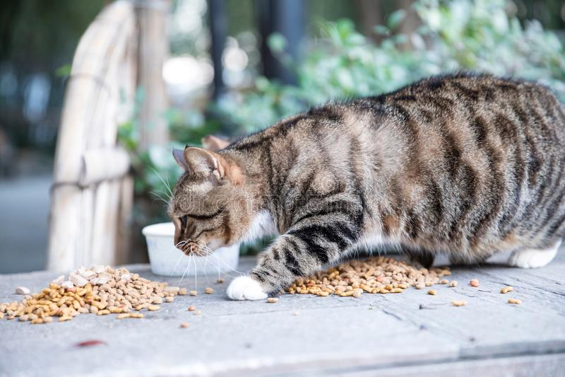 De kat die eet stock afbeeldingen