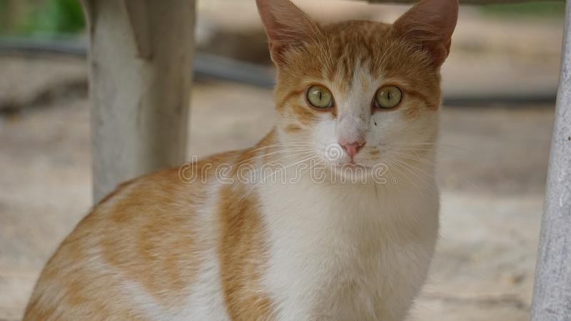 De kat is een zeer woedend Huisdier stock foto's