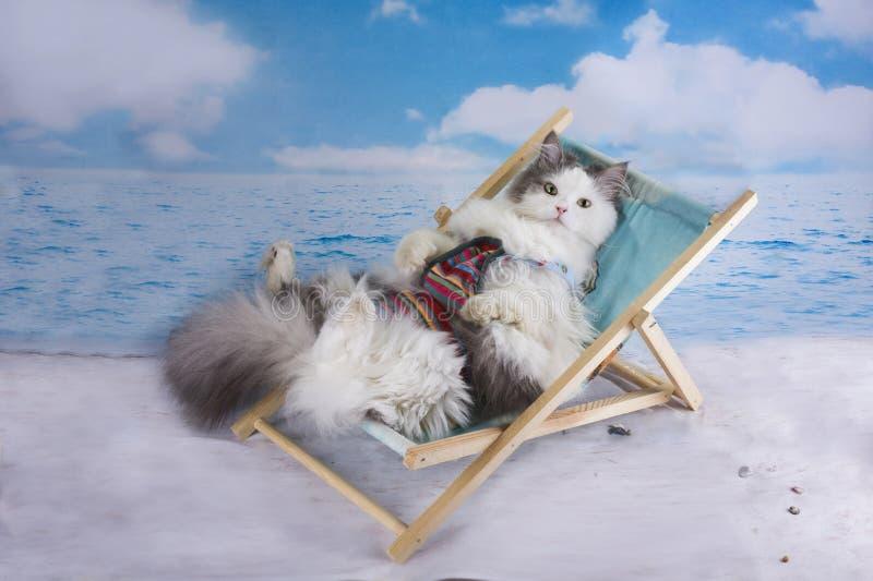 De kat in een zwempak zonnebaadt op het strand stock afbeelding