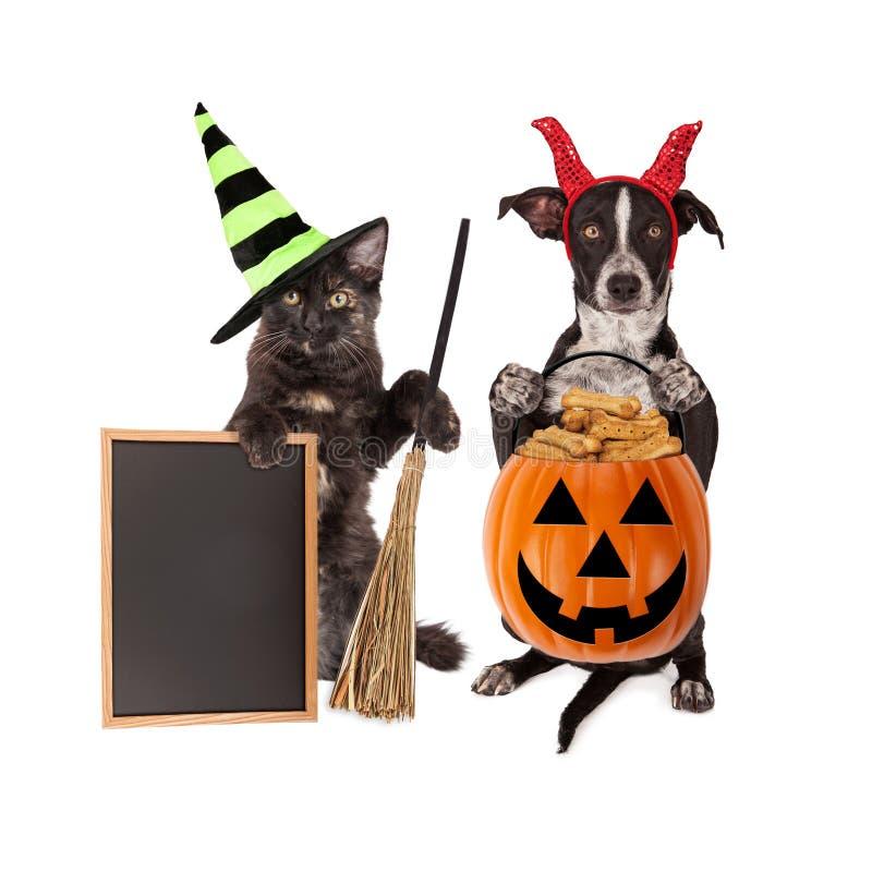 De Kat en de Hond Leeg Bord van Halloween stock foto
