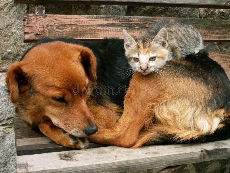 De kat en de hond zijn vrienden die de werkgever is royalty-vrije stock afbeelding