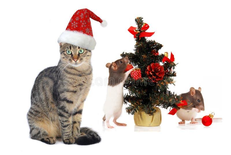 De kat en de rat van de Kerstman van Kerstmis stock afbeeldingen