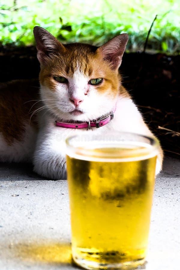 De kat en het bier in de zomer ontspannen concept royalty-vrije stock fotografie