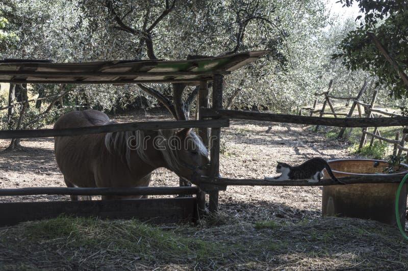 De kat en het paard royalty-vrije stock afbeelding