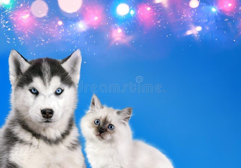 De kat en de hond samen, de pot van de nevamaskerade, Siberisch schor puppy kijken ongecompliceerd op blauwe fonkelende achtergro royalty-vrije stock foto