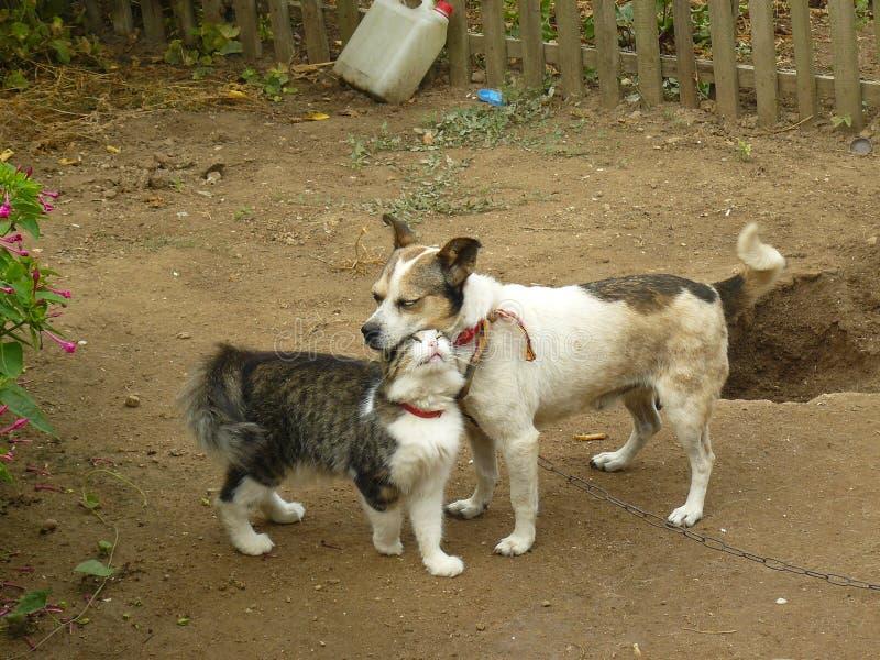 De kat en de hond van vriendschapshuisdieren stock afbeelding