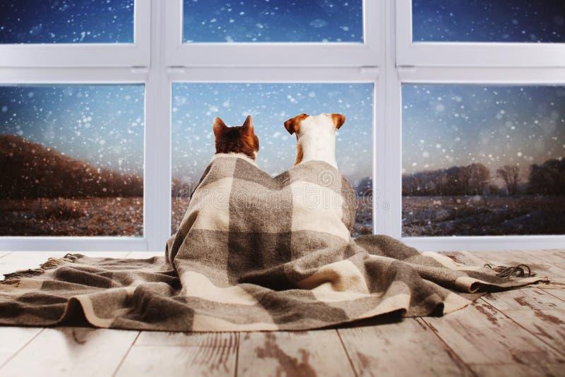 De kat en de honden kijken uit het venster stock foto's