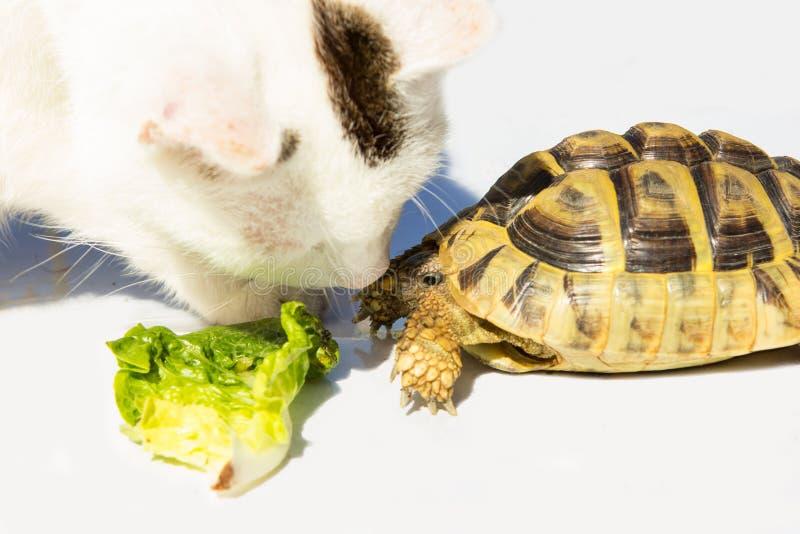 De kat en de Schildpad krijgen vrienden stock afbeelding