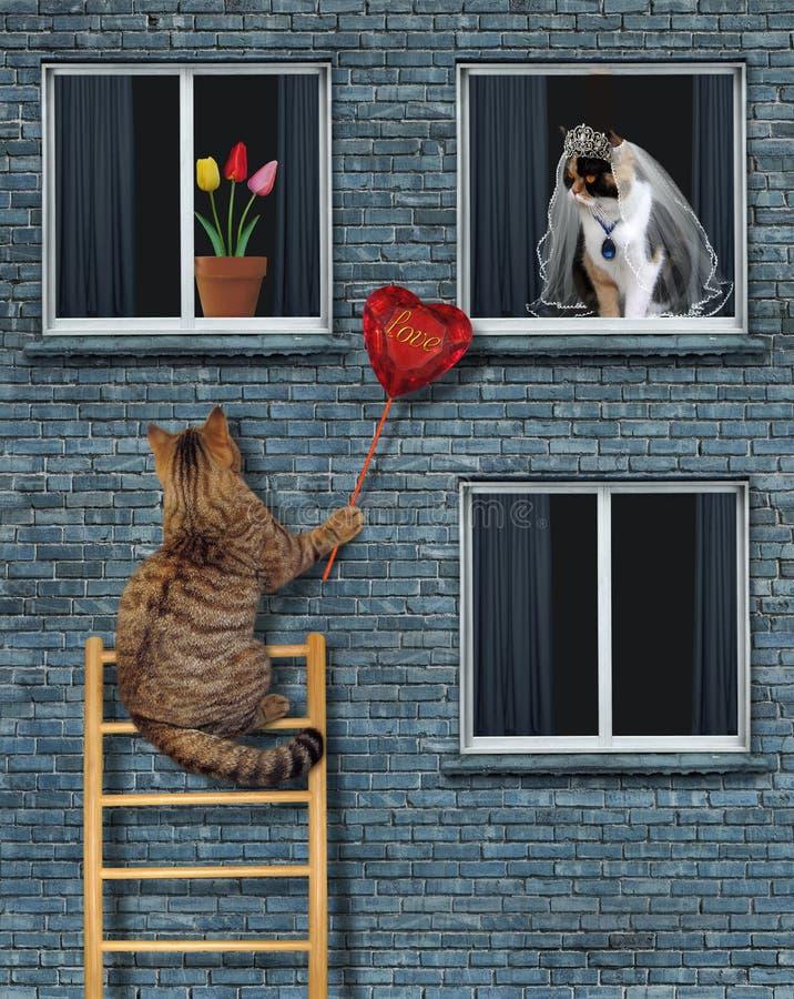De kat geeft een robijnrood hart aan zijn bruid royalty-vrije stock fotografie
