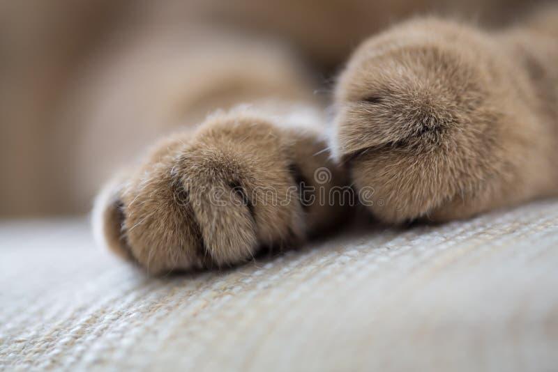 De kat handtastelijk wordt close-up macroschot stock foto