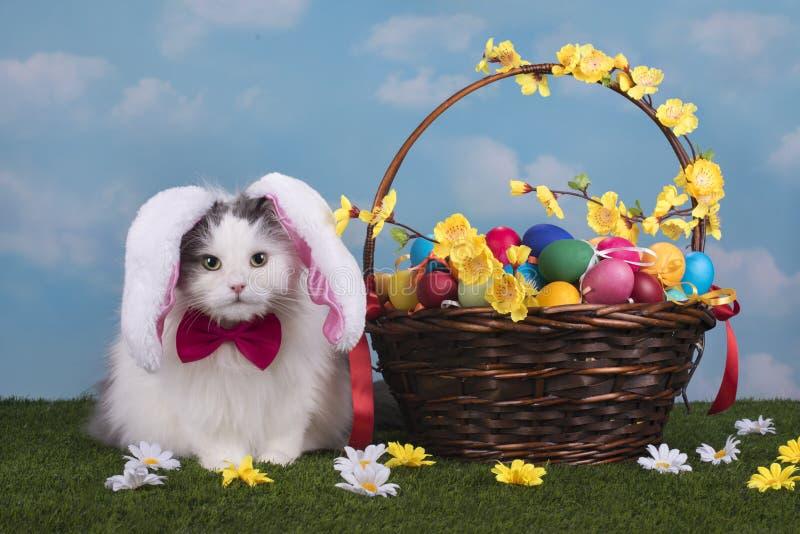 De kat in het kostuumkonijntje viert Pasen stock afbeeldingen