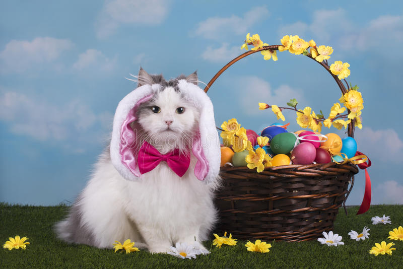 De kat in het kostuumkonijntje viert Pasen royalty-vrije stock fotografie