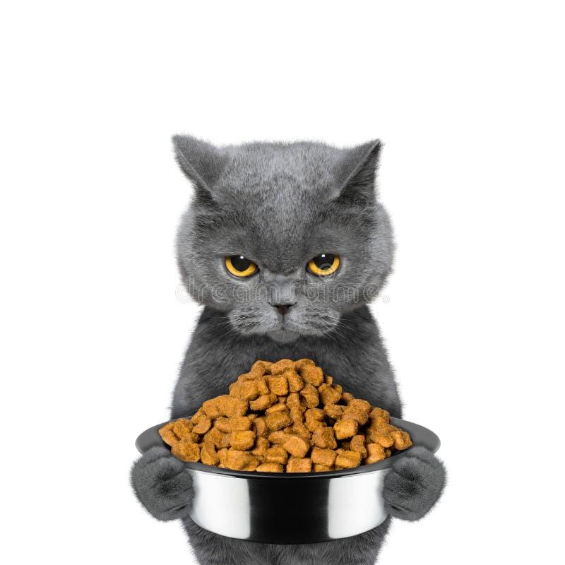 De kat is hongerig en houdt het voedsel royalty-vrije stock fotografie