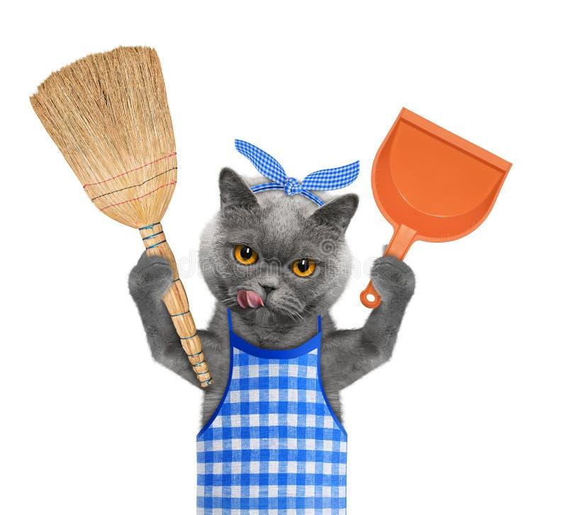 De kat houdt bezem en lepel in poten Geïsoleerd op wit royalty-vrije stock foto's