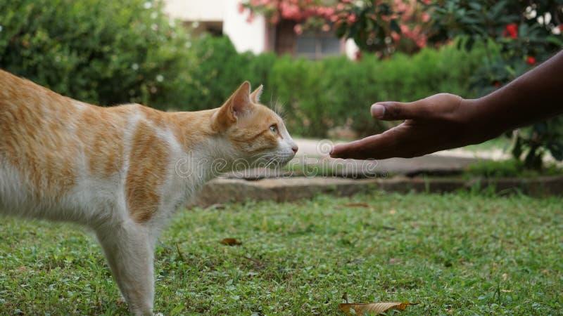 De kat houdt van menselijke handen stock afbeelding