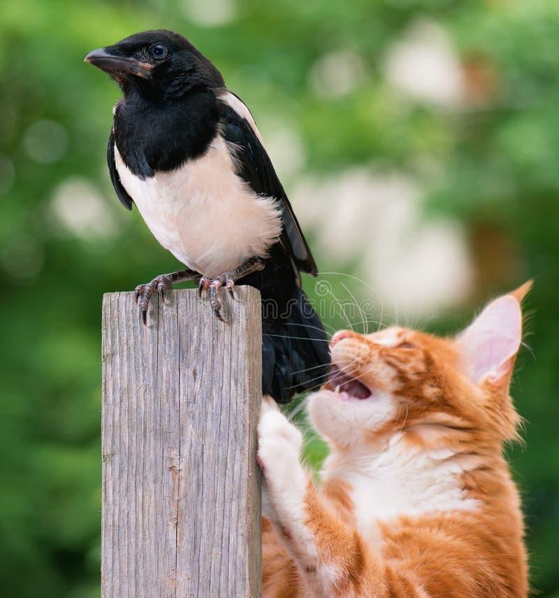 De kat joeg een vogel stock afbeelding