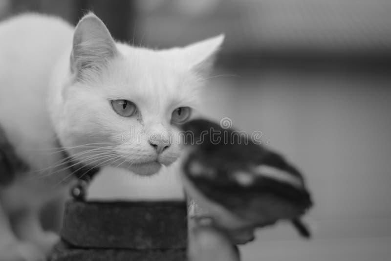 De kat kijkt een kleine vogel royalty-vrije stock foto's