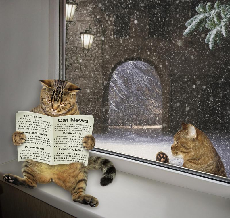 De kat leest een krant op de vensterbank stock foto's