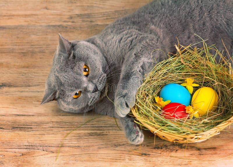 De kat legt dichtbij mand met gekleurde eieren stock afbeeldingen