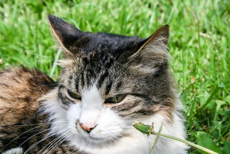 De kat ligt in het groene gras royalty-vrije stock foto's