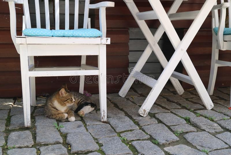 De kat ligt onder de witte stoel royalty-vrije stock afbeeldingen