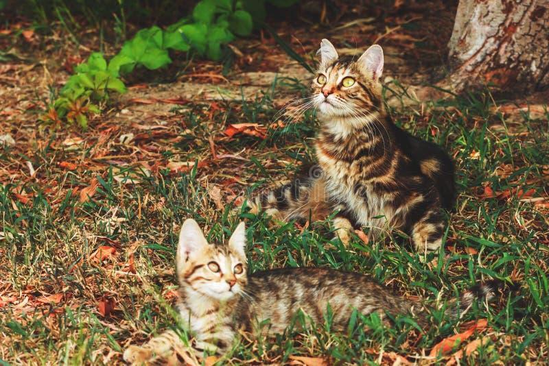 De kat ligt op het gras in de schaduw stock fotografie