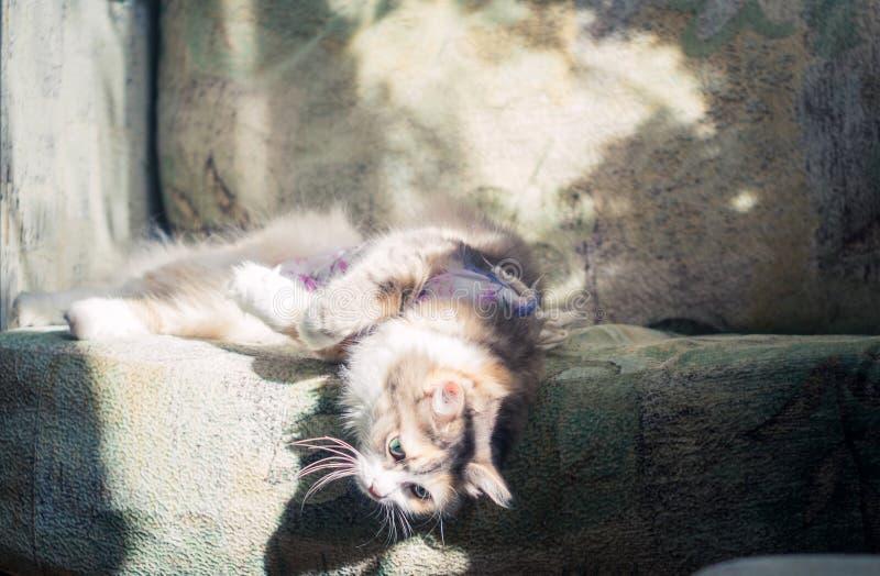 De kat ligt op de laag royalty-vrije stock afbeelding