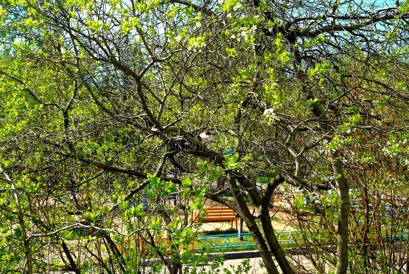 De kat ligt op de takken van een boom in de lente royalty-vrije stock afbeeldingen