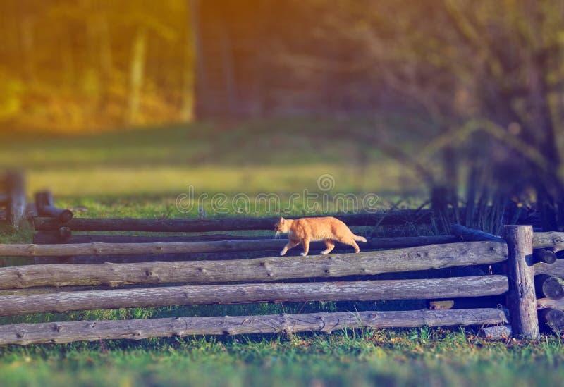De kat loopt op een houten omheining in een dorp royalty-vrije stock afbeeldingen
