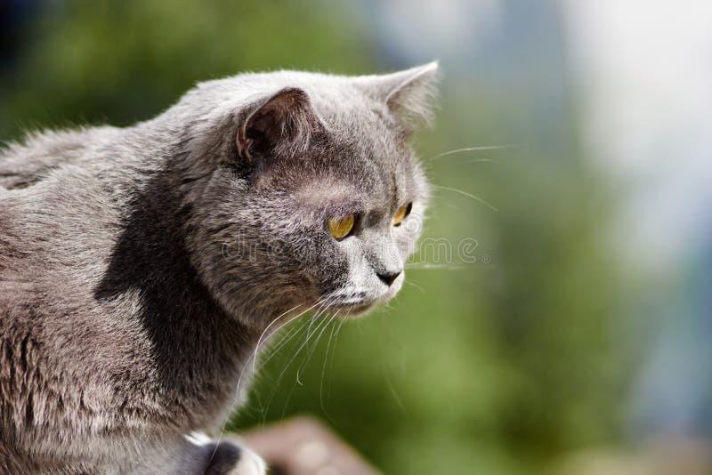 De kat loopt op het balkon stock afbeeldingen
