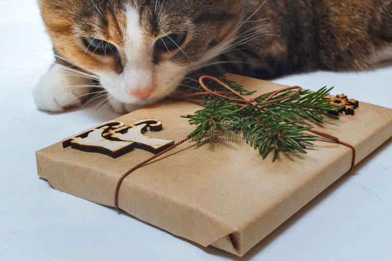 De kat met nieuwsgierigheid bekijkt aanwezige Kerstmis royalty-vrije stock foto's