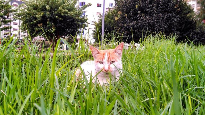 De kat is mooie dieren hoe kattenrust royalty-vrije stock foto