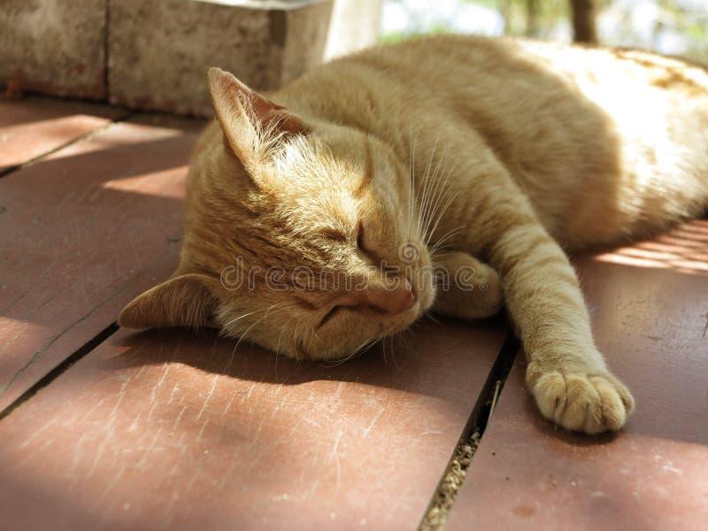 De kat neemt een dutje royalty-vrije stock afbeeldingen
