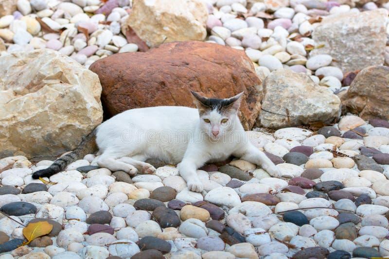 De kat neemt een rust royalty-vrije stock foto's